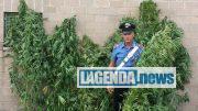 Rivoli arresti droga
