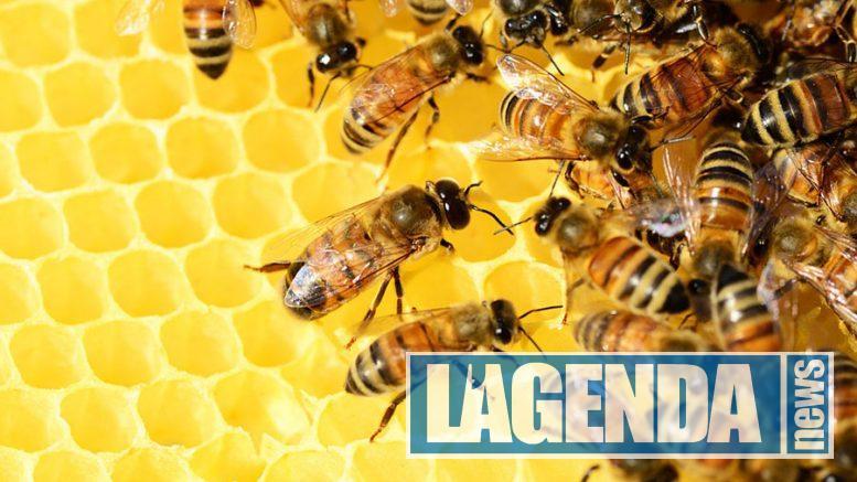 val di miele avigliana