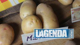 sagra patata mocchie