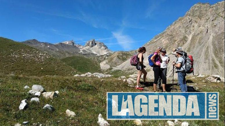 Bardonecchia marcia alpina