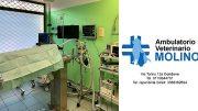 Ambulatorio Veterinario Molino