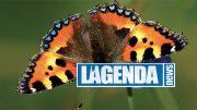 Vanessa dell'ortica, tratta dal libro Le farfalle delle Alpi, Blu Edizioni