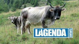 Grigio Alpina Blu Edizioni