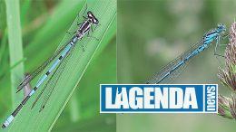 L'azzurrina comune, Le libellule delle Alpi, Blu Edizioni