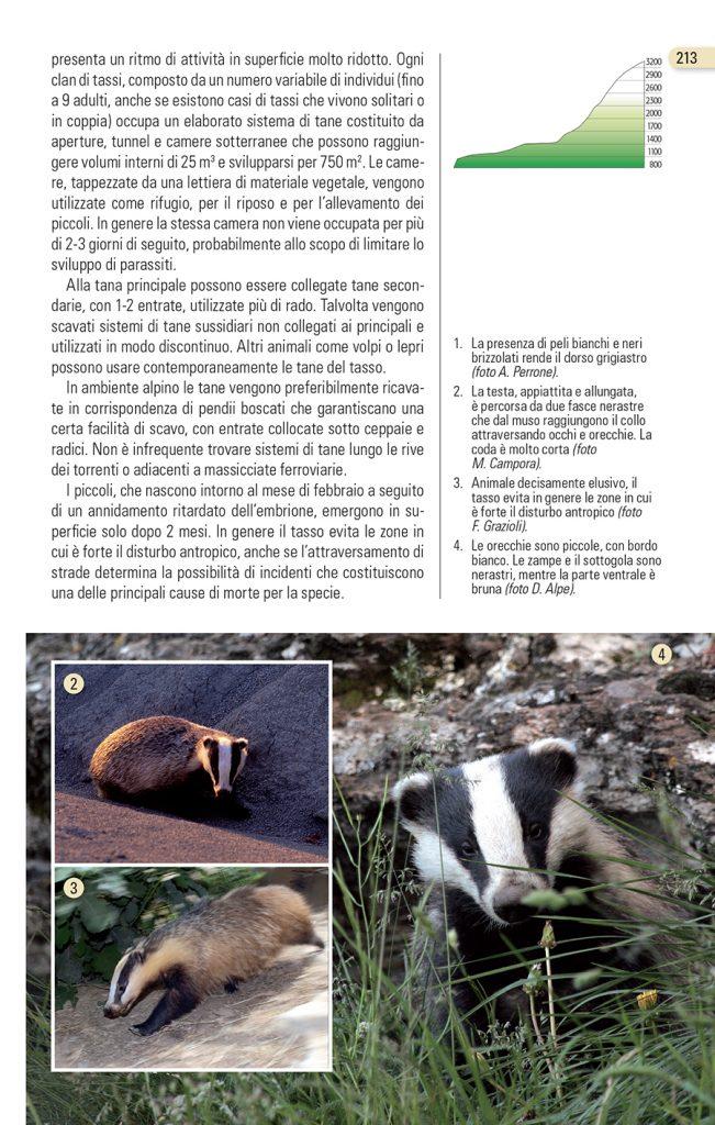 Il tasso. I mammiferi delle Alpi, Blu edizioni