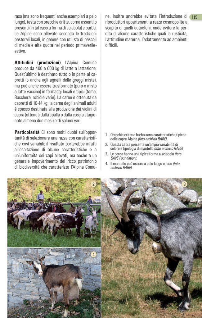 Alpina Comune Blu Edizioni