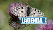 Farfalle Apollo Blu Edizioni