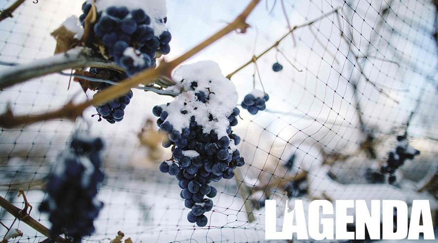 vino ghiaccio